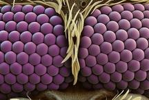 Insects, Arachnids, Invertebrates