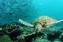 Scubadiving Bucketlist  / Places I would like to go, sites I want to dive. :-)