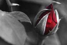 Briar Rose / by Melli R