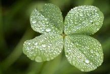 Holidays - St. Patrick's Day