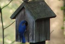 Make a little birdhouse in your soul / by Melli R