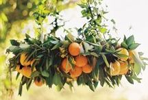 Citrus Wedding Theme / Fruit and bright colors / by Alethea Bryant