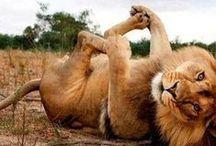 Adorable Animals / Ah, animals! They make life sooooooo much better! / by Mo Adank