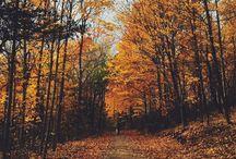 Autumn / by hedgehogerie