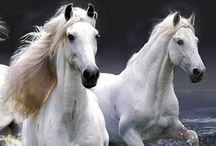 Year of..... / Horses