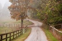 A Road less Travelled / nature