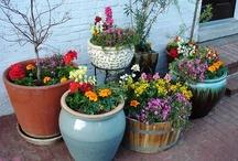 Flower Garden Ideas / by Stephanie Bassham