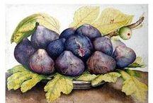 Printables--fruit/veggie