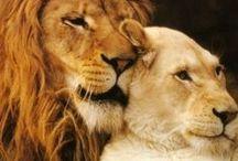 Lannister / House Lannister of Casterly Rock, of the Westerlands. Words: Hear me Roar. Sigil: A lion.