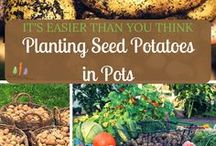 Container Garden Vegetable Ideas / Vegetable Container Gardening Ideas-and sometimes other fun plants! Container garden ideas abound on Pinterest. It is so inspiring!