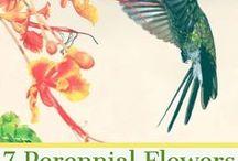 Flower Gardening / Gardening with flowers and using flower gardens to attract wildlife.