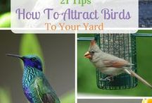 Cool Nature and Wildlife Articles / A little on attracting nature to your garden, yard, pond, etc. A little on the awesomeness of nature. Some can't resist and HAD to Pin finds. Etc. Etc.