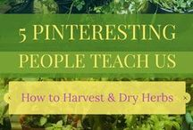 Herbs - Growing, Harvesting, Drying, Preserving, and Storing / Tips and tricks for growing, harvesting, drying, preserving and storing herbs