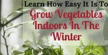 Gardening in Fall and Winter / Do you vegetable garden in the fall and winter? I am saving ideas and tips here so we can all benefit from each other's wisdom.  Outdoor and indoor gardening ideas. I might even throw in a few flower gardening articles too!