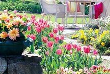 Garden / Gardening tips, tricks, how-tos, and inspiration!