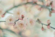 springtime.