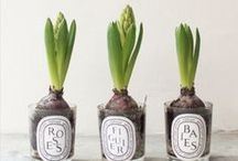 Grow stuff. / by Natalie Belle