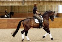 A Sport Only Truly Understood By Those Who Partake (See my other horse board! Horses II) /   / by Charnae Viljoen