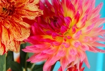 FLORALS / A collection of beautiful floral images.