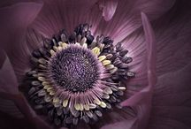 Botanical / #botanical #floral