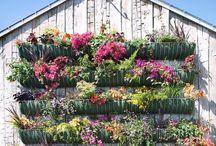 Flower Box Gardening