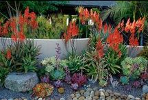 Delightful Plant Decor Outdoors / Different ideas for your outdoors!