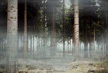 Woodland / Regal trees,  quiet respite.  Special, sacred spaces.