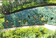 Living Walls / Geranium Streets unique custom made living wall. Allowing customers to bring in any size that they require and give a pleasant look without compromising quality.