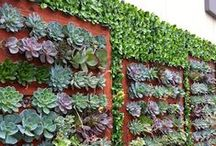 Hybrid Living Wall / Geranium Streets own Hybrid Living Wall. Combining living succulents with artificial boxwood and/or artificial succulent hedge mats creates the perfect balance between real and faux! Drought Tolerant? You bet!