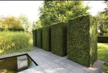hedge fun two! / Hedges from around the world..can you tell the artificial hedges from the real ones?
