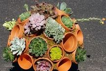 Succulent Container Ideas / Cool containers for indoor or outdoor succulents