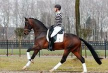 """Dressage...translated to mean """"training"""" / Dressage is referred to as """"the highest expression of horse training"""".  This is usually phase 1 of the 3 events. This event is where horse and rider are expected to perform from memory a series of pre-determined movements!"""