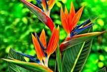 Tropical Backyard / by Jainell Wesson