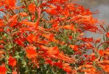 """Top 10 Native Plants for Xeriscaping! / """"While California's native plants have graced gardens worldwide for over a century, few of the landscapes designed for our state's gardens reflect the natural splendor for which California is famous. By gardening with native plants, you can bring the beauty of California into your own landscape while also receiving numerous benefits."""" by California Native Plant Society (CNPS) Thank you!"""