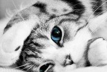 Bouille de chatons / Moments de bonheur