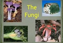 The Fungi / by Science Stuff