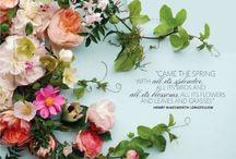 Lifestyle: Flowers || Plants / by Liz Perryman