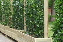 gardening / how does your garden grow / by Linda Davis