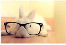 Style File - Bunnies / Bunnies, Bunnies, Bunnies, Bunnies, Bunnies... I love Bunnies!