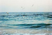 Beachy / by Sarah Fairbanks