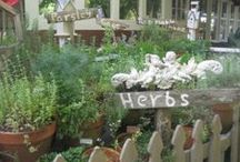 Mary, Mary, Quite Contrary. . . / Herb and Vegetable Garden Ideas / by The Lace Bandana
