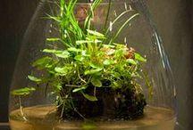 bonsai & Terrariums / Everyone loves little trees