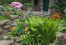 Garden / by Monica Amy