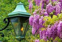 Lilac, Lavender, & Wisteria Avenues /  Pin all you want....no limitations from me. / by Donna Hardway Yoho
