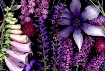 Color Inspiration: Purple / Mood board and inspiration for ways to use and pair purple.