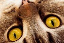 Kitties...