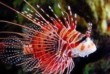 Oceans' creatures