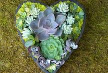 For the Home - LANDSCAPING / by Claudine D