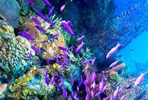 Snorkel and Dive / | Underwater Gear and Resources |