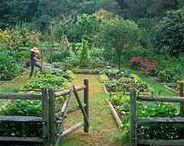 Garden Inspiration / garden inspiration and outdoor spaces